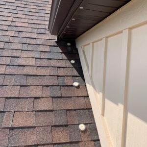 a-1-exterminators-solar-panels-birds-2